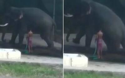 Slon nechtěně zabil svého chovatele, který ho bil holí, aby si lehl. Muž mezitím uklouzl