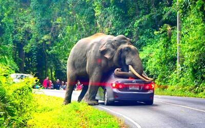 Slon podišiel k autu plnom turistov a začal sa oň škrabať. Zábery vyzerajú úsmevne, no mohlo ísť o život