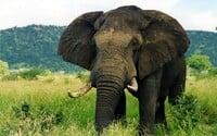 Slon se rozběhl a udupal lovce k smrti. I když jde o tragédii, na internetu lidé nemají pro muže moc pochopení