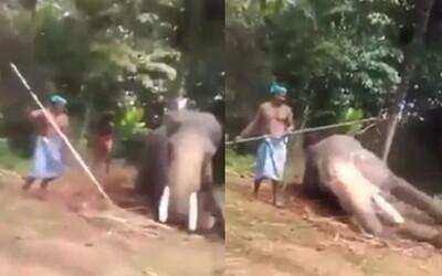 Slona zbili a zlomili mu nohu, protože ho chtěli využít jako turistickou atrakci. Otřesné video z Indie pobouřilo internet