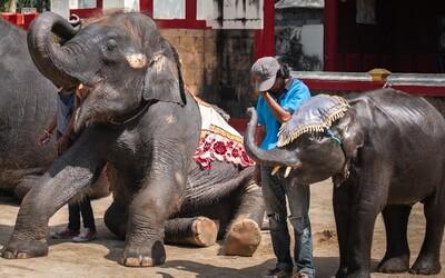 """Sloní mládě zemřelo poté, co si zlomilo obě zadní nohy. V thajské zoo ho nutili """"tančit"""" i třikrát denně"""