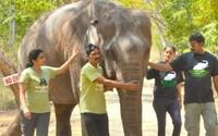 Sloni v ruském cirkuse museli procestovat 16 tisíc kilometrů. Ochranáři už sepsali petici