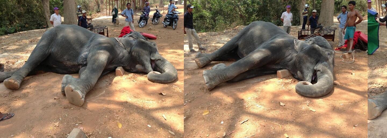 Slonice Sambo zemřela na infarkt, když musela vozit lidi ve vysokých vedrech. Její organismus to po 15 letech nezvládl