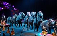 Slony už viac nebudú musieť vystupovať v cirkusoch. New York vydal oficiálny zákaz, za jeho porušenie hrozí mastná pokuta