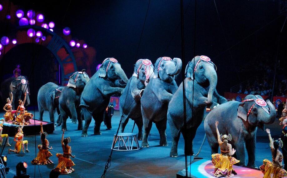 Sloni už nebudou muset vystupovat v cirkusech. New York vydal oficiální  zákaz, za jehož porušení hrozí mastná pokuta | REFRESHER.cz