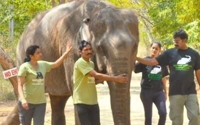 Slony v ruskom cirkuse museli precestovať 16-tisíc kilometrov. Ochranári už spísali petíciu