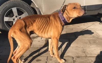 Slováci nechali psa celé týždne samého v garáži bez jedla a bez vody, keď ho našli, vážil sotva 17 kíl
