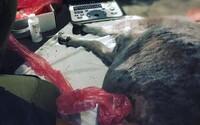 Slováci v parku kŕmili ovečku zakázanou stravou, čakal ju výplach žalúdka či infúzia