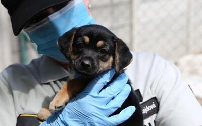 Slováci zatvorili šteniatko do skrinky na odkladanie nákupov v obchodnom centre, polícia vec rieši ako týranie zvierat