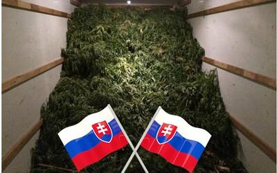 Slovák pašoval 1,4 tuny marihuany za více než 200 milionů korun v kamionu. Oficiálně se tvářil, že převáží citroníky a olivovníky