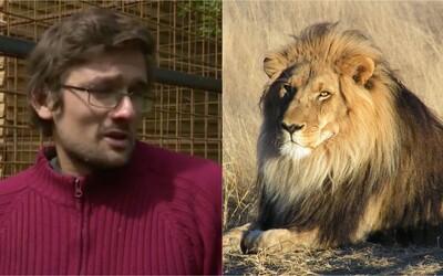 Slováka zabil vlastný lev, ktorého choval aj napriek zákazu