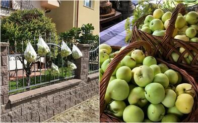 Slovenka obdarováva jablkami svojich susedov úplne zadarmo. Sáčky plné ovocia vešia na plot