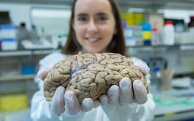 Slovenka študovala účinky marihuany na schizofréniu a pracovala aj v ženskej väznici. Za výskumy dostala mnohé ocenenia (Rozhovor)