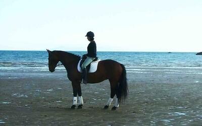 Slovenka Veronika cvičí kone na svetovej úrovni. Krásne zvieratá považuje za svoju prácu, ale aj vášeň (Rozhovor)