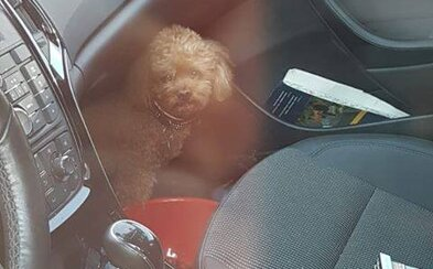 Slovenka zamkla svojho psa v aute pri extrémnych horúčavách