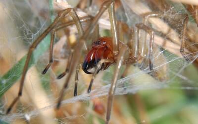 Slovenku uhryzol najjedovatejší pavúk v našej krajine. Nechcela ho zabiť, tak sa ho len jemne chytila
