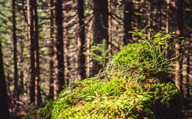 Slovenská príroda v Tichej doline sa krásne zregenerovala úplne sama po tom, čo ju pred rokmi zdevastovala víchrica aj škodcovia