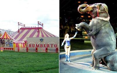 Slovenské mesto zakázalo cirkusy so zvieratami, bojuje proti drezúre aj zlému zaobchádzaniu