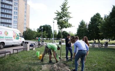 Slovenskí absolventi sa miesto písania mien na chodník rozhodli zasadiť stromy