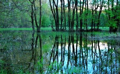 Slovensko má nový národný park! Stalo sa ním ohrozené územie pokrývané lužnými lesmi