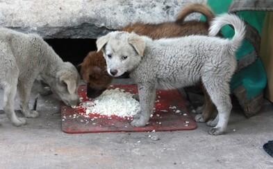 Slovenskú stanicu pre psov ochranári prirovnali ku koncentračnému táboru. Mŕtvolu šteniatka údajne mali zjesť potkany
