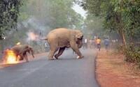 Smutná fotka horiaceho sloníčata vyhrala vzácne ocenenie. Záber trpiaceho mláďaťa posiela vážny odkaz