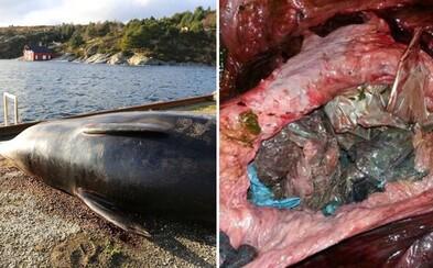 Smutná realita dnešního světa. V žaludku mrtvé velryby se našlo 30 plastových igelitek, kvůli nimž nemohla strávit jakoukoliv potravu