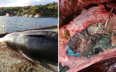 Smutná realita dnešného sveta. V žalúdku mŕtvej veľryby sa našlo 30 plastových igelitiek, kvôli ktorým zviera nedokázalo stráviť akúkoľvek stravu
