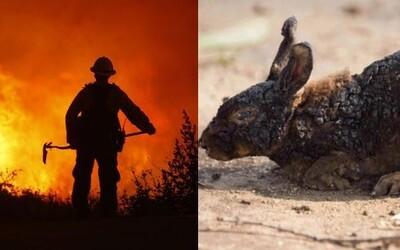 Smutné fotky zachycují zvířata, která nestihla utéct před kalifornskými požáry