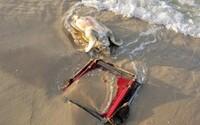 Smutné svedectvo doby. Kriticky ohrozenú korytnačku zabila plážová stolička omotaná okolo krku, ktorú tam nechali nezodpovední ľudia