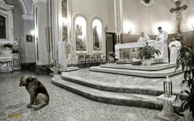 Smutný psík čaká každý deň v kostole svoju paní a dúfa, že sa raz vráti