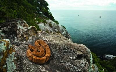Snake Island - najhoršie možné miesto na stroskotanie