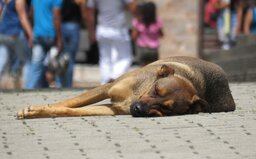 Sněmovna odsouhlasila zpřísnění trestů za týrání zvířat. Tyranům hrozí až šest let za mřížemi, za množírnu deset