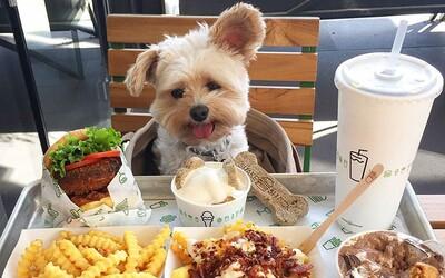 So psom budeš konečne môcť ísť do reštaurácie. Vláda vyšla psíčkarom v ústrety