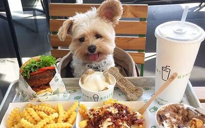 So psom budeš mať do reštaurácií aj naďalej vstup zakázaný. Novela zákona v parlamente neprešla