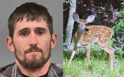 Soud nařídil, že pytlák se bude muset ve vězení každý měsíc dívat na film Bambi