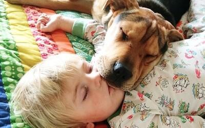 Spachtoši Beau a Theo sa už takmer nezmestia do postele