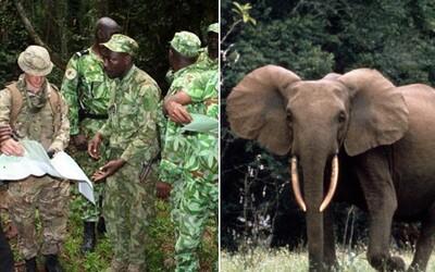 Spojené království vyslalo do Afriky vojáky, aby ochránili ohrožené slony před pytláky. Trénují místní strážce, jak je bránit