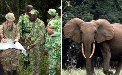 Spojené kráľovstvo vyslalo do Afriky vojakov, aby ochránili ohrozené slony pred pytliakmi. Trénujú miestnych strážcov, ako ich brániť