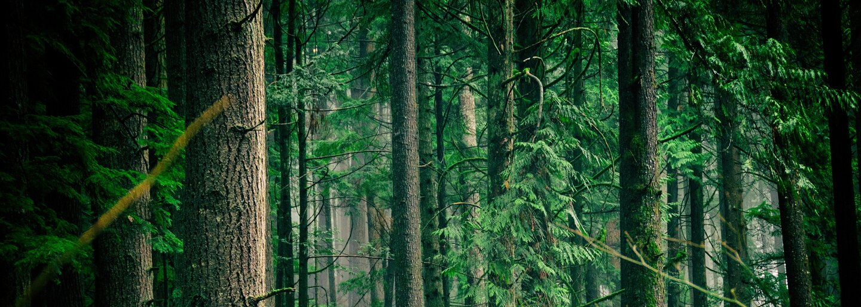 Spomínaš si na kampaň My sme les? Štátna firma prišla s protireklamou