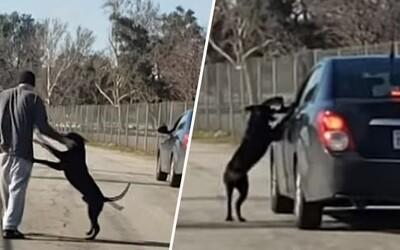 Srdcervoucí video zachycuje muže, který svého psa opustil na kraji cesty. Ten se ho zoufale snažil doběhnout