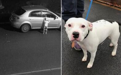 Srdcervúce video zachytáva psíka, ktorého práve majitelia vyhodili na cestu. Zúfalo sa snažil dostať späť do auta