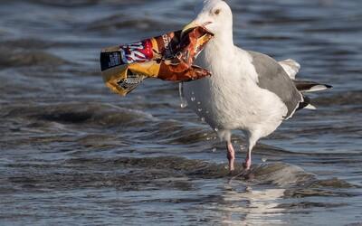 Stále více mořských živočichů se živí odpadky. Proč je tomu tak?