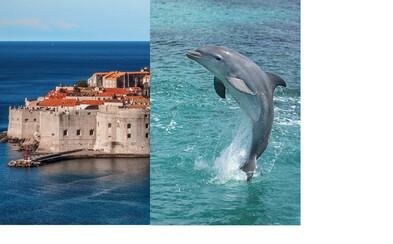 Staraj sa o delfíny a cestuj po Chorvátsku 4 týždne zadarmo. Spoločnosť ponúka dobrovoľníctvo snov