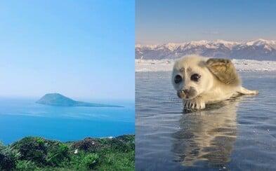 Starej se o roztomilé tuleně za více než 50 tisíc korun měsíčně. Ostrov ve Walesu hledá pár, který bude s rozkošnými zvířátky žít 3 roky