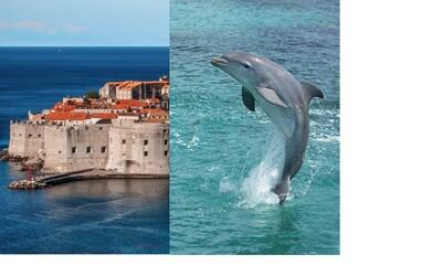 Starej se o delfíny a cestuj po Chorvatsku 4 týdny zdarma. Společnost nabízí dobrovolnictví snů