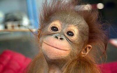 Šťastné zvieratká, ktorým vidno na tvári úsmev, vám určite zlepšia náladu