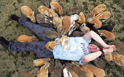 Stovky divokých králíků na ostrově v Japonsku obklopují turisty, kteří je přijeli navštívit