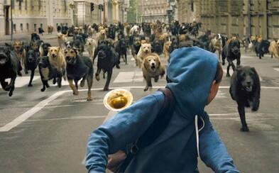 Stovky psov vyvolávajú krvavé povstanie v budapeštianskych uliciach vo filme White God (Tip na Film)