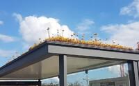 Stovky zastávek přeměnili na království pro včely. Nizozemci se chtějí pracovitým živočichům zavděčit